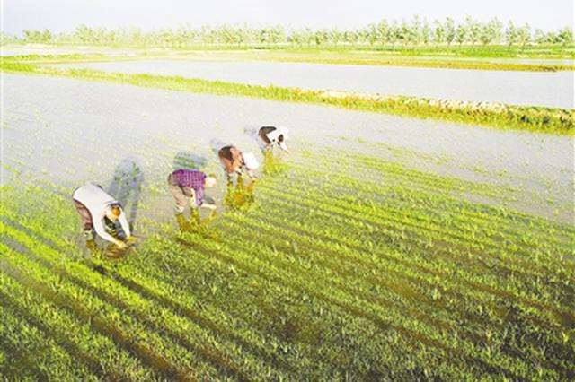 改善生态环境实施土壤改良 昔日盐碱地 今日生态美