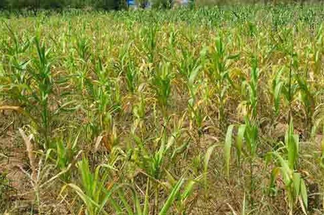 干旱!内蒙古1938万亩农作物5.5亿亩草场饱受饥渴