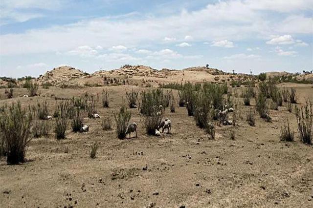 内蒙古5.5亿亩草场干旱受灾 未来3天预计有雨