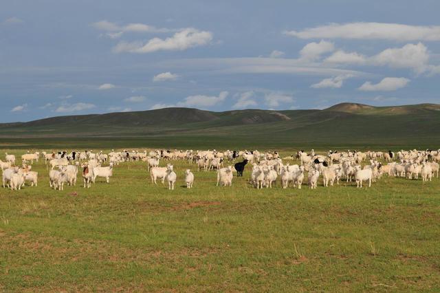 西乌珠穆沁旗迅速整改自然保护区放牧问题