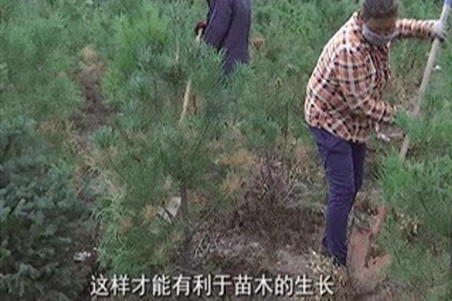 绿化 内蒙古呼和浩特市回民区渣土空地变苗圃