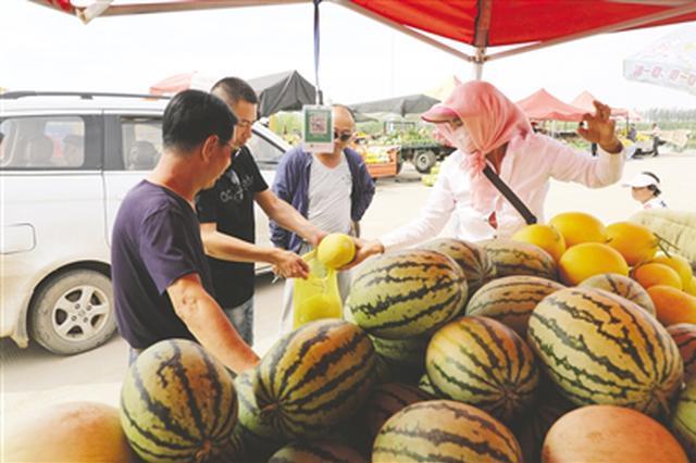 内蒙古自治区巴彦淖尔市和平村西甜瓜俏卖