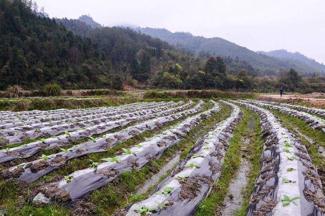 呼和浩特:狠抓土壤污染防治 打好净土保卫战