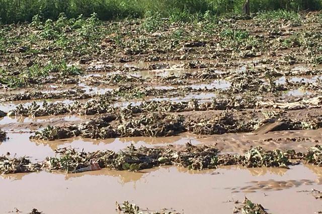 巴彦淖尔市洪涝灾害造成直接经济损失5.36亿元