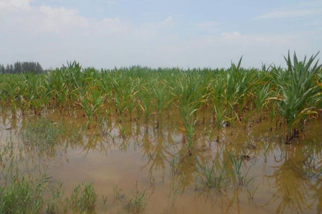 强降雨致鄂尔多斯近30万亩农作物受灾