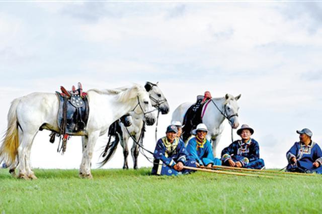 乌珠穆沁白马的速度、力量与美