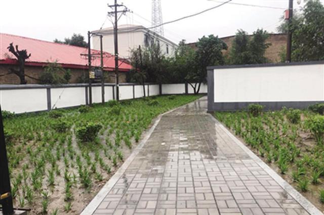 兴安北路长海木器厂:昔日垃圾场 今日绿化地