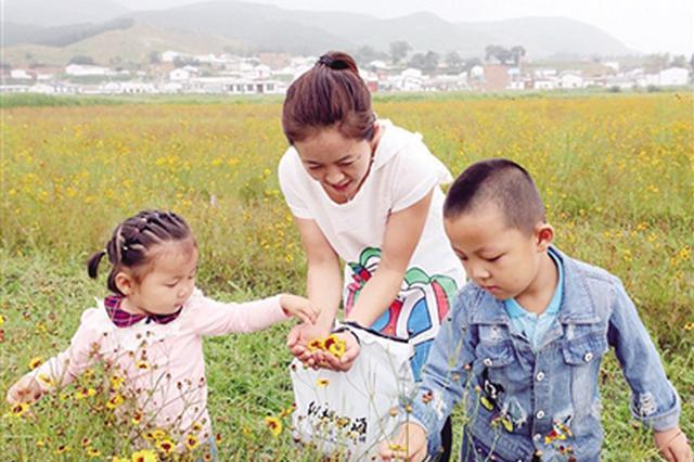 呼和浩特新城区 首届雪菊茶采摘文化节开幕
