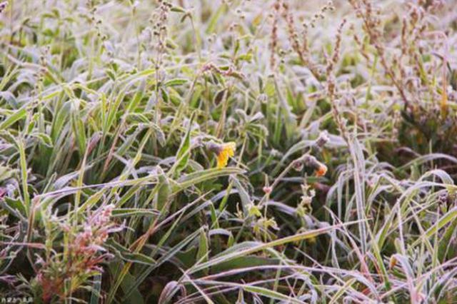 内蒙古地区出现初霜冻天气 呼伦贝尔市7.7万人受灾