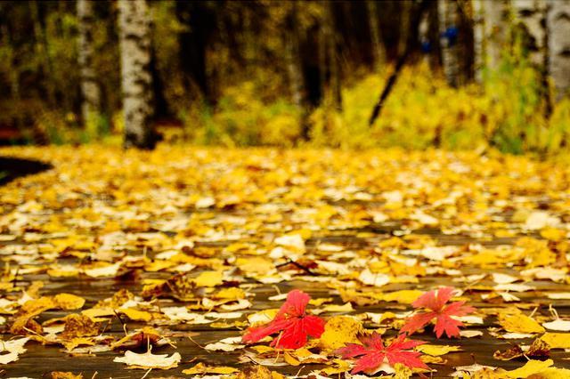 秋风秋雨至 全区均已入秋这个周末降温有点猛