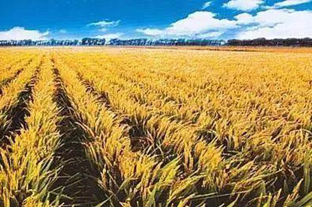 """兴安盟被授予""""内蒙古优质稻米之乡""""称号"""