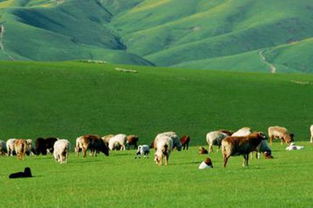 """锡林郭勒:现代化畜牧业进程中""""牧歌""""嘹亮"""