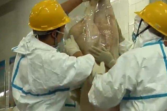 呼和浩特紧急排查 未发现疑似非洲猪瘟病例