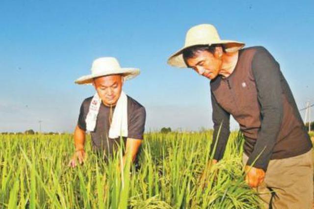 通辽市:绿色高质高效农业 鼓起农民钱袋子