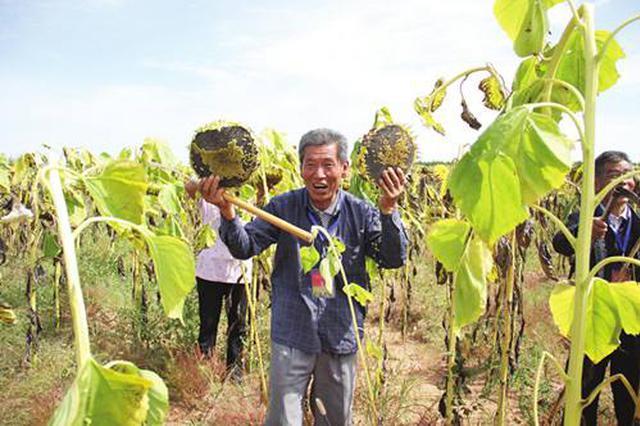 鄂尔多斯市首届中国农民丰收节吸引3万多人