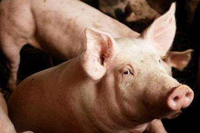 内蒙古农牧业厅:已有4人因呼和浩特猪瘟疫情被刑拘