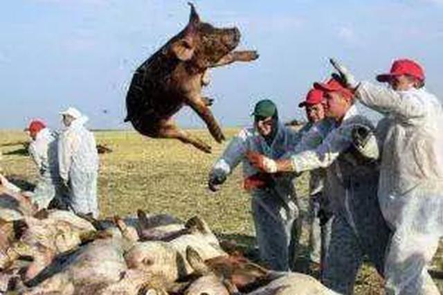 全区公安机关重拳打击涉非洲猪瘟疫情违法犯罪行为