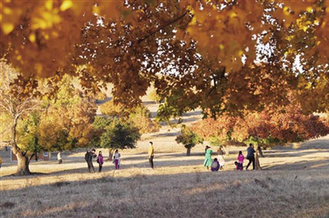 层林尽染 姹紫嫣红 五角枫自然保护区迎来最美时节