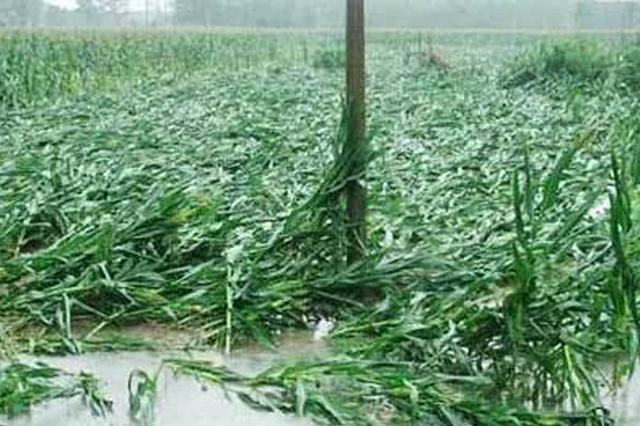 今年汛期内蒙古气候特点:高温多雨前旱后涝灾害频发