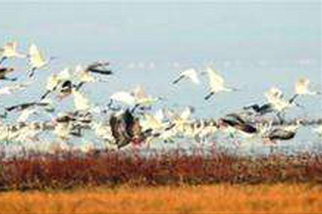 呼伦贝尔扎兰屯市:合力保护过境和越冬候鸟