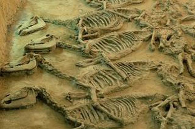内蒙古额吉淖尔镇境内新发现一处恐龙化石群