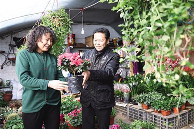 呼和浩特市民在花卉市场选购盆栽植物