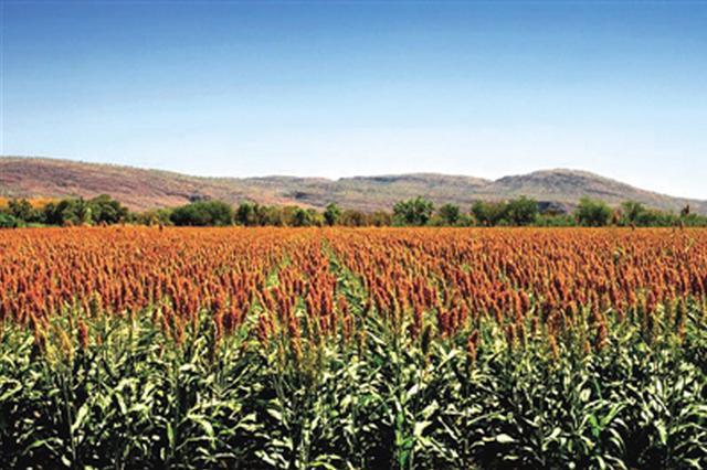 河套酒业:建设绿色生态原粮基地 造富家乡