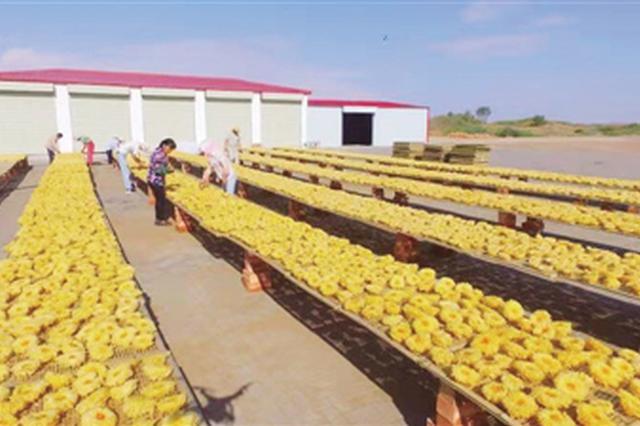 阿拉善盟:源辉林牧公司在腾格里马兰湖成功试种银耳