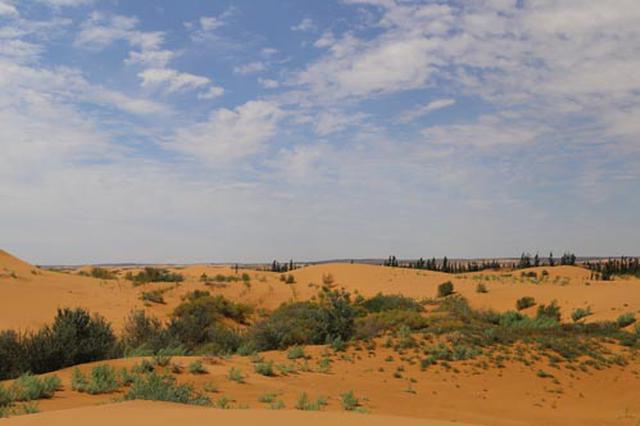 4位退休老兵与阿拉善腾格里沙漠的绿色情缘