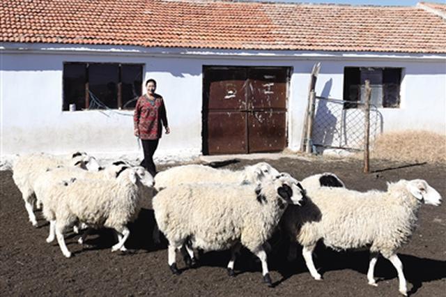 锡林郭勒盟西乌珠穆沁旗:牲畜出栏有序进行