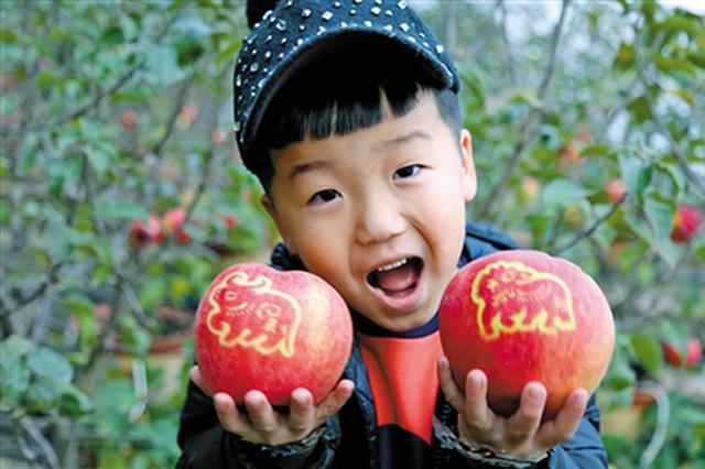大兴安岭农垦巴彦农场举办第二届有机苹果采摘节