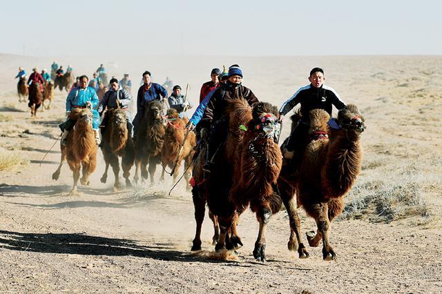 乌拉特后旗冬季骆驼文化旅游节开幕