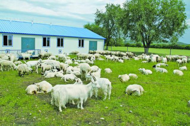 内蒙古主要农畜产品总体合格率连续5年稳居96%以上