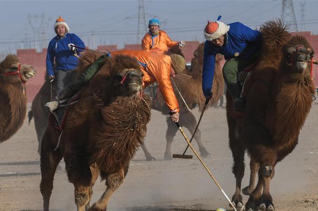 驼背上的激战——蒙古族驼球比赛