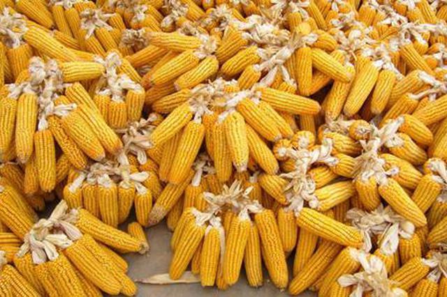 玉泉区完成2018年度玉米生产者补贴发放工作