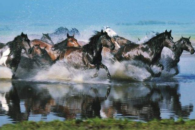 首届内蒙古国际马文化博览会马学研讨会召开