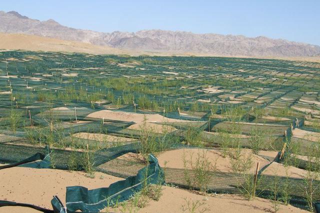 通辽科左后旗保护与开发并重 全力推进沙产业发展