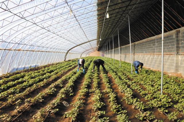 通辽市奈曼旗:发展绿色设施农业助力乡村振兴