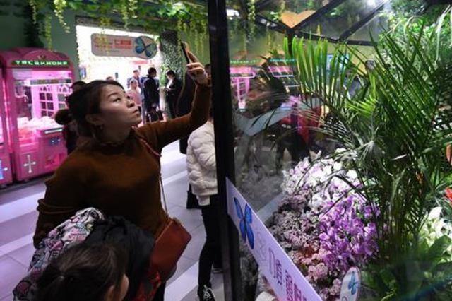 """来""""热带雨林""""看蝴蝶"""