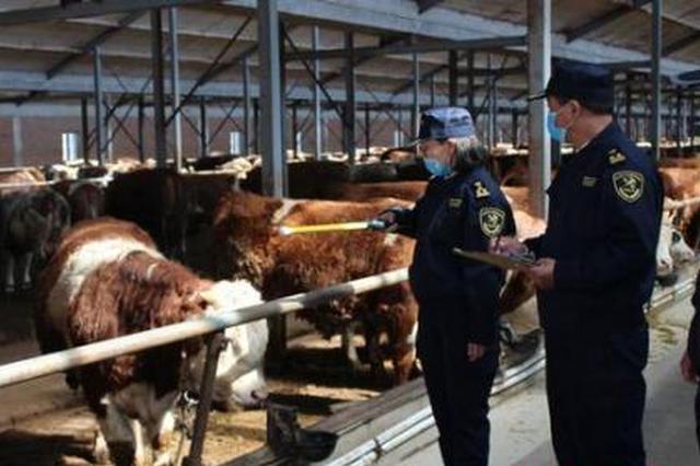 内蒙古20年累计向香港输送10万余头通辽肥牛