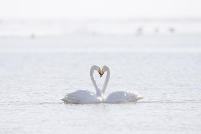 【国际爱鸟日】爱的翅膀 自由飞翔