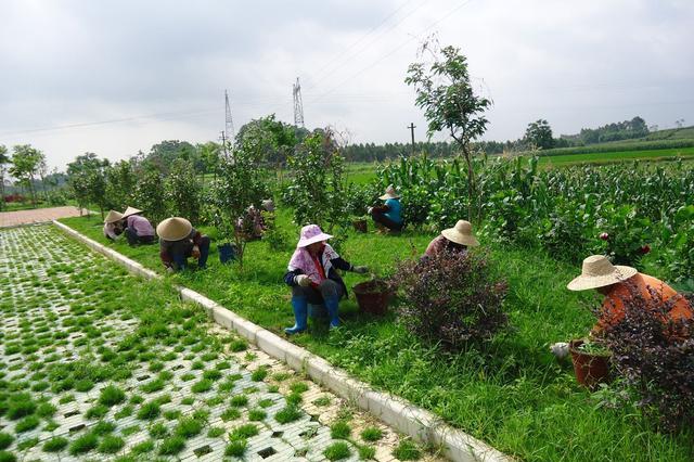 呼和浩特市和林县:提高城镇园林绿化品位