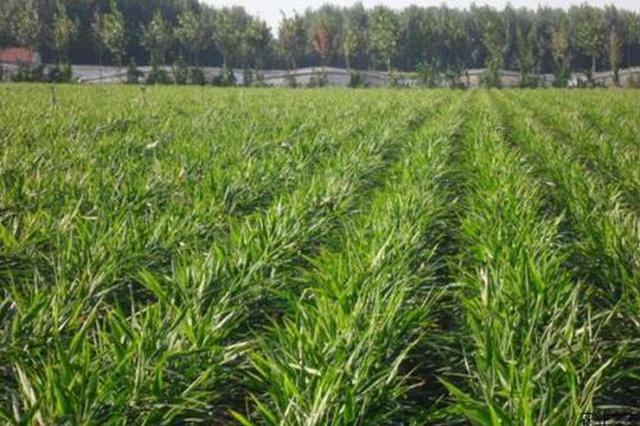 通辽市科左后旗全力打造水稻种植示范基地