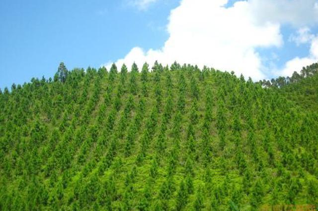 通辽市争取春季完成全年造林任务的90%以上