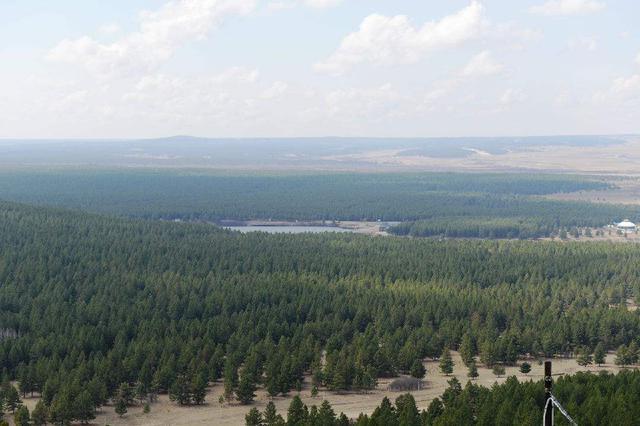 共筑北方生态屏障 400余棵樟子松落户和林格尔