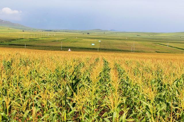 通辽市坚持稳粮增效提升农牧业综合生产能力