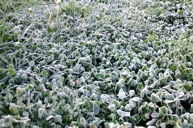 呼和浩特市出现近十年最晚霜冻 致部分作物遭受冻害