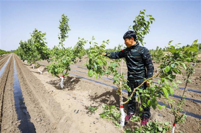 通辽市开鲁县绿色果品经济林已发展到24万亩