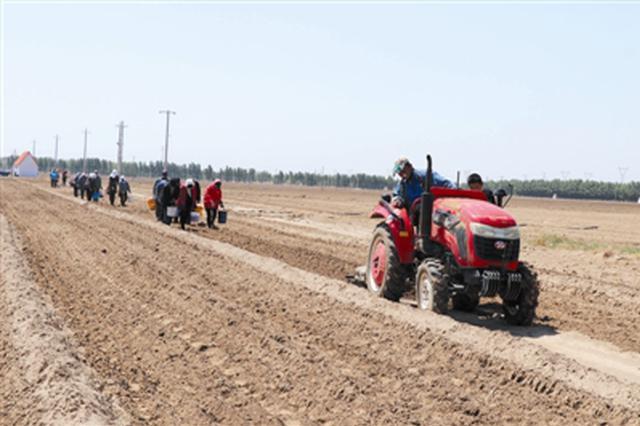 通辽市科尔沁:千亩药材种植带动村民致富增收