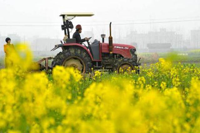 内蒙古自治区农作物已播9521.2万亩 目前进度为80%
